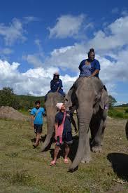 i wanted to ride an elephant like oprah u2013 sweet tiffys inspirations