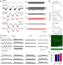 kainate receptors mediate signaling in both transient and