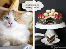 funny birthday cat 33 desktop background funnypicture org