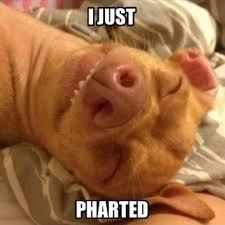 Tuna The Dog Meme - 183 best phahaha images on pinterest ha ha funny stuff and funny