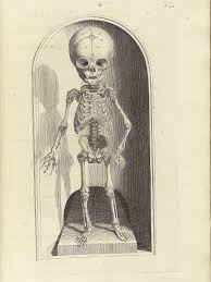 cool halloween drawings engraving of a full facing fetal skeleton standing on a wooden