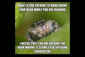 Spider Meme - misunderstood spider meme fun