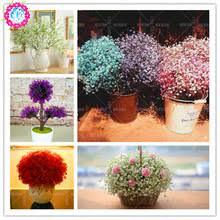 Indoor Fragrant Plants - online get cheap beautiful indoor plants aliexpress com alibaba