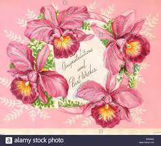 wedding congratulations best wishes wedding cards stock photos wedding cards stock images alamy