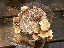grow your own mushrooms hgtv
