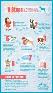 cold weather care for your dog protect fido from winter 8 steps to walk your dog in winter
