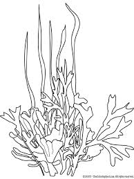 sea plants coloring pages 73 best printables templates ocean images on pinterest