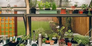 setting up your greenhouse how to start a greenhouse the