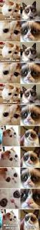 best 50 funny cat vs dog memes images to prove who u0027s boss