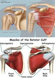 Subscapularis And Supraspinatus How To Fix Shoulder Pain