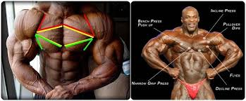 decline bench press muscles chiselled chest best workout routine for lean muscle growth