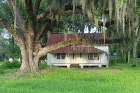 classic florida style cracker house with huge live oak