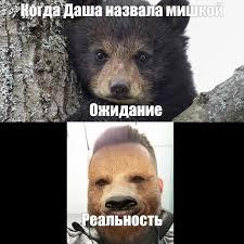 Meme Bear - create meme bear cub black bear baby bear pictures meme