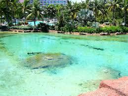 predator lagoon atlantis bahamas hammerhead shark pool flickr