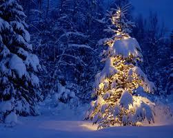 winter winter tree snow christmas pine desktop wallpaper season