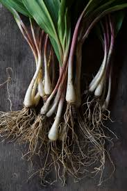 Freezing Root Vegetables - how to freeze turnips two ways