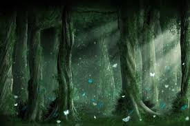 wallpaper tumblr forest tumblr forest background 4 background check all