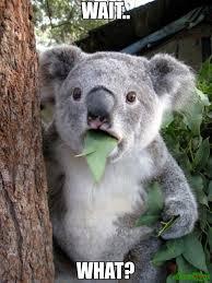 Wait What Meme - wait what meme surprised koala 289 memeshappen