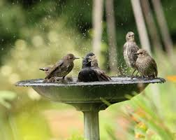 How To Keep Birds Off Your Patio by Providing Water For Birds Celebrate Urban Birds