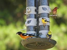 the great backyard bird count is near because birds