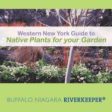 long island native plant initiative home buffalo niagara waterkeeper