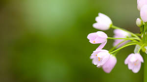 flowers blooming 809408 walldevil