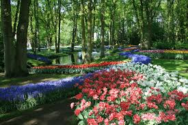 pictures of beautiful gardens with flowers keukenhof wikipedia