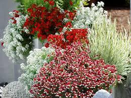 topfpflanzen balkon pflanzen in rot und weiß für balkon und terrasse blumenkästen