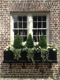 Flowers For Window Boxes Partial Shade - best 25 dwarf flowering trees ideas on pinterest dwarf trees