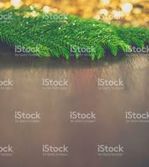 real christmas tree branches with gold bokeh stock photo 500640392