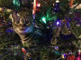 free photo kitty christmas tree pet animal free image