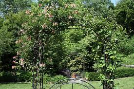 Plants For Pergolas by 12 Best Climbing Plants For Pergolas And Arbors Mental Scoop