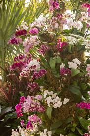 the orchid show thailand u201d opens at nybg february 18th u2013 the