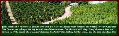 frosty s tree farm