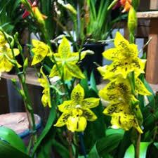 Ny Topiary - photos for nytopiary yelp