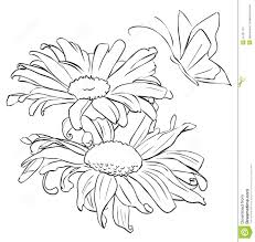 outline flower for painting stock photo image 51421115