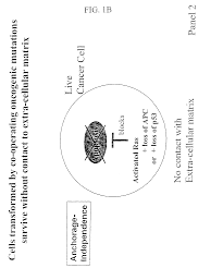patent us8613907 compositions that inhibit proliferation of