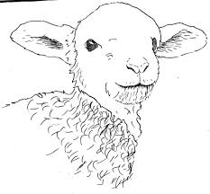 lamborghini sketch easy drawing of a lamb drawing art ideas