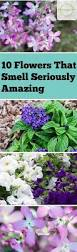 10 flowers that smell seriously amazing bless my weeds