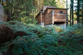 artist house dense british columbia forest nestles artist s house by agathom