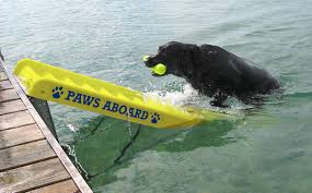 Floating Dog Bed The Best Dog Ramps And Ladders For Boats 2017 Dogs Recommend