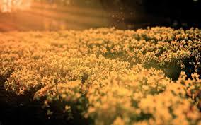 flower picture 1080p windows 2560x1600 700 kb ololoshenka