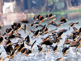 bird lovers dehradun birders contribute to great backyard bird