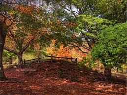 Mt Lofty Botanic Gardens Mt Lofty Botanical Gardens Adelaide By Paula Mcmanus