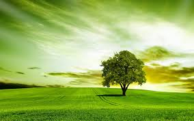 green tree hd wallpapers and pictures image cluster