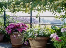 container gardening for beginners garden trends