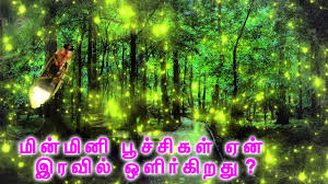 How Do Fireflies Light Up How And Why Do Fireflies Light Up Tamil Mojo Youtube