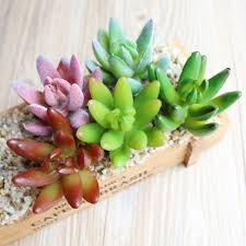online get cheap artificial succulent plants aliexpress com