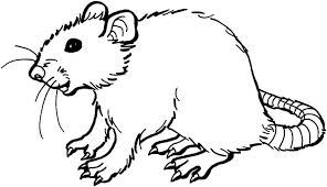 coloring page of a rat rat coloring pages getcoloringpages com