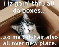 Moving Meme Pictures - moving cats funny cats image 2966859 by yanito on favim com